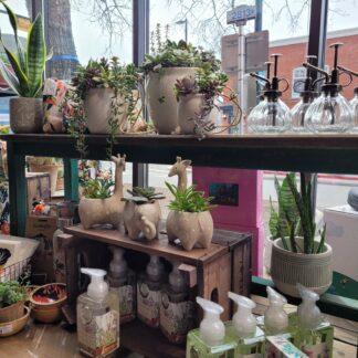 Gifts/Plant Stuff